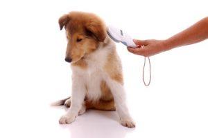Identifizierung der Haustiere mit Lesergerät